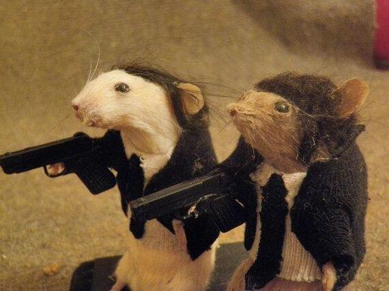 souris empaillées qui ressemblent à des personnages de Pulp Fiction
