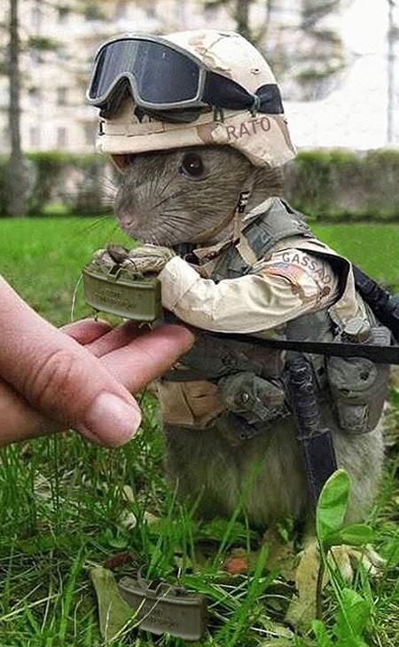 souris déguisée en soldat